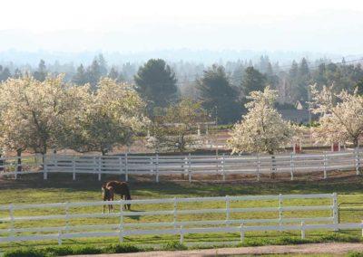 DeVito Equestrian Center pasture-image-5