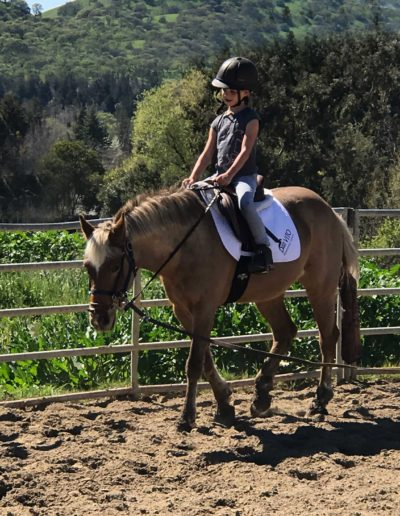 Riding-Lesson-Round-Pen