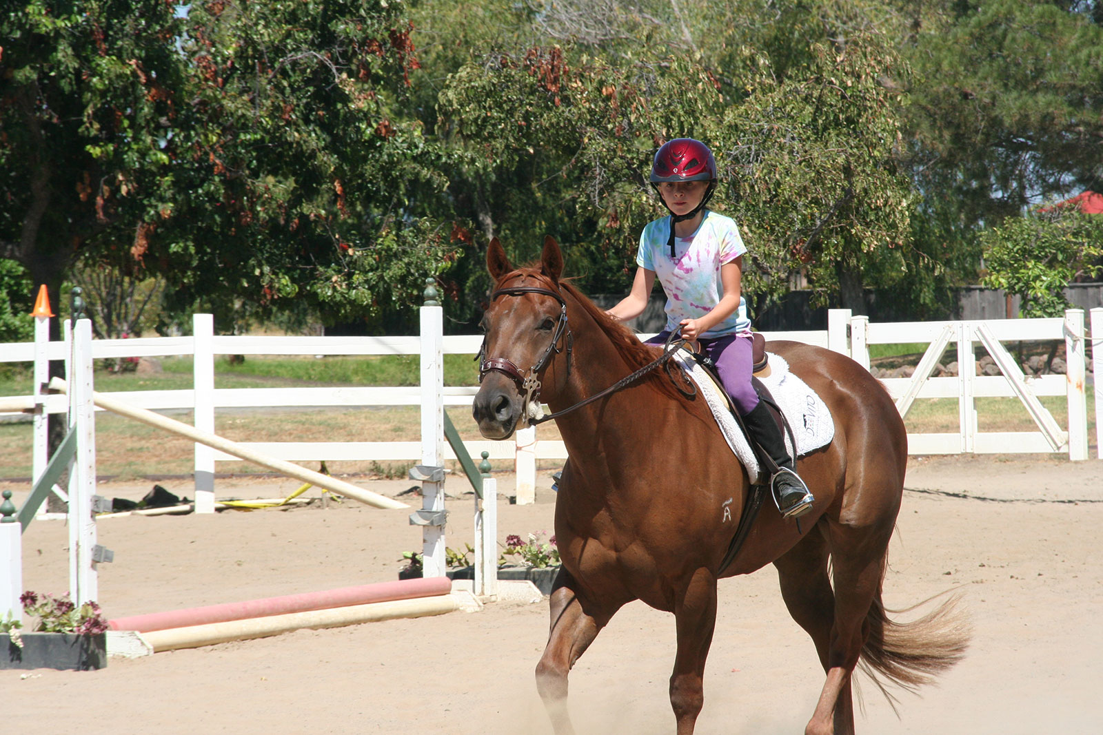 Riding Lesson Focus