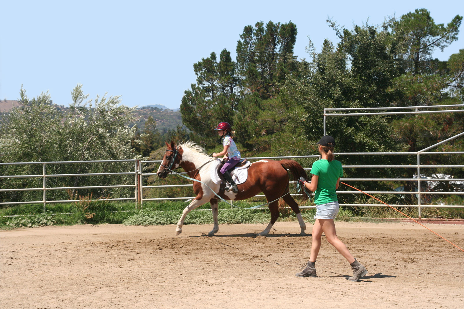 Learning to Canter on the Lunge Line