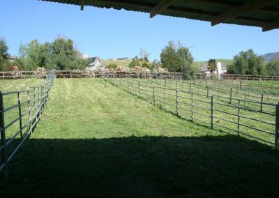 """Looking out of our Double Stalls to a 24' x 200"""" Private Paddock"""