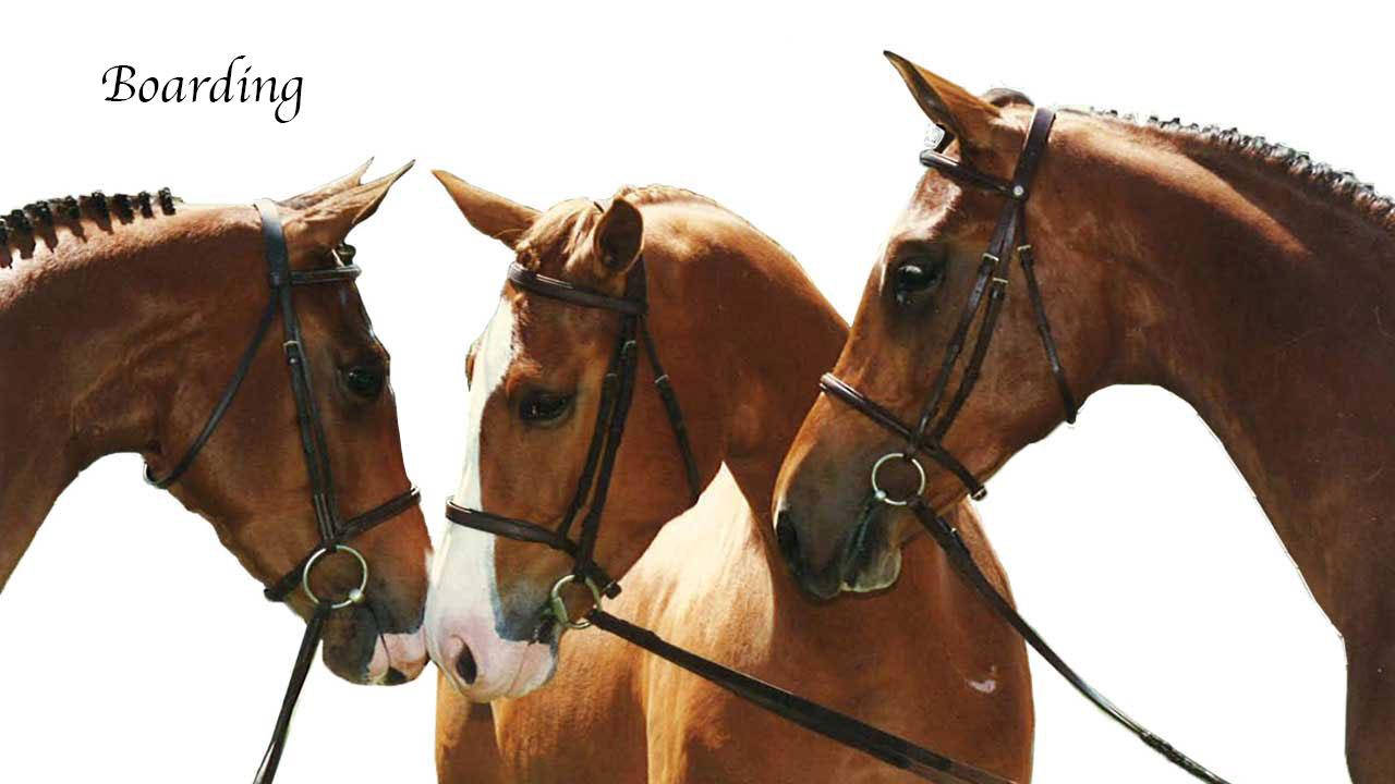 Full-Service-Horse-Boarding-4